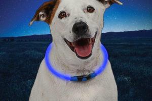 NiteHowl blue dog