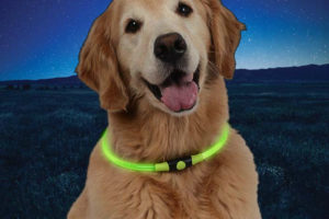 NiteHowl green dog