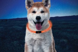 NiteHowl orange dog